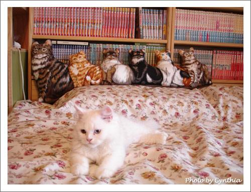 好多貓的抱枕