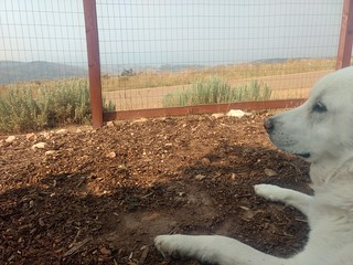 Smoky guarding