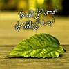 42161167770_5bac42ec7a_t