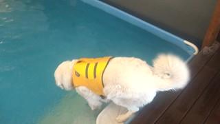Mavis going for a swim