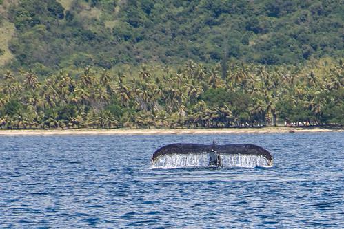 Baleine - Hienghène - Nouvelle Calédonie