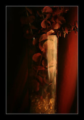 Red Eucalyptus photo by ILINA S.