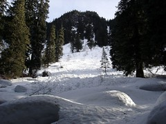 One of many, many old avalanches