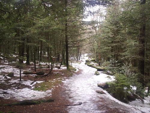 Vosges in Feb 2006