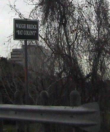 Waugh Bridge 'Bat Colony'