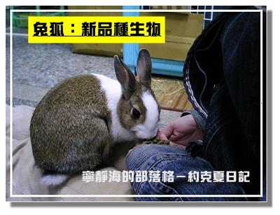 約克夏日記_20060302_兔狐?