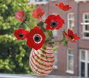 flatflowerpoppy_large