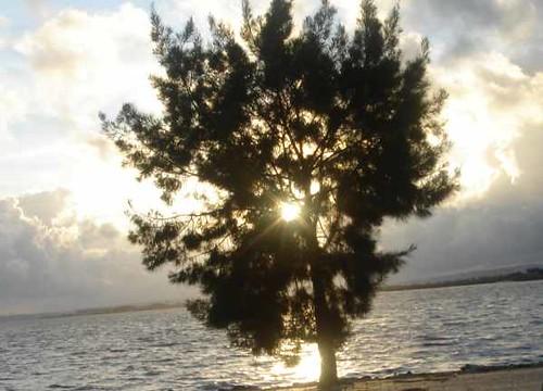 a minha árvore