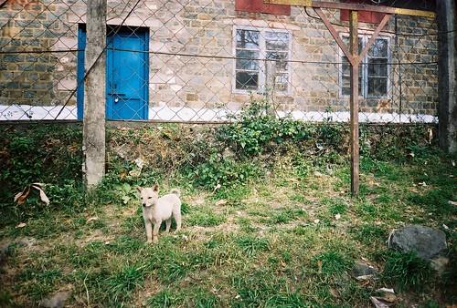 The puppy in Kasauli