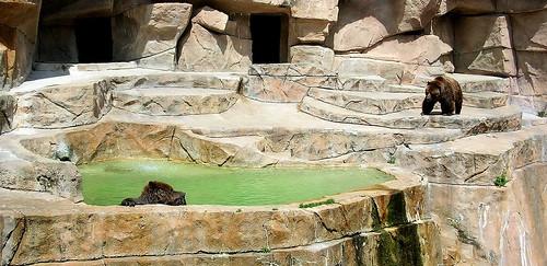 Zoo XIII