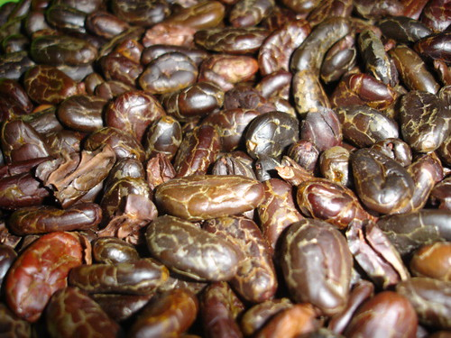 Roasted cacao beans, ready to grind
