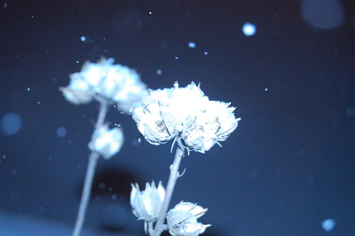 faux cyanotype 3