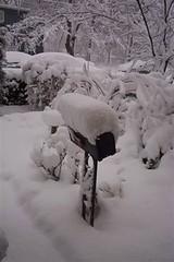 Snow on Mailbox: 2006