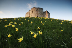 Cliffords Tower and daffodils photo by itspaulkelly