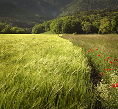 Fields.Always photo by Chris (archi3d)