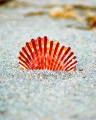 Playing with a sea shell photo by mysza831