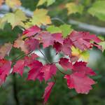 9/28/18 Leaf peepers rejoice... it