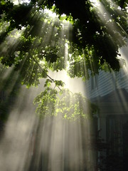Sunbeams II photo by ChicagoSage