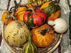 Autumn's colors  - Still life with gourds photo by KADREV