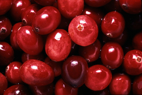 Cranberries by argusmaniac