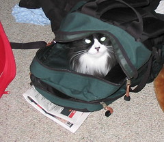 Nigella hides in the backpack