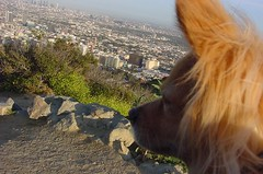Rusty Overlooking Hollywood
