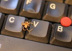 spider-c-v