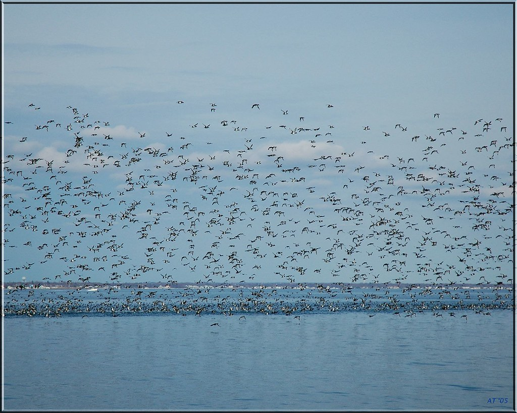 Island of birds...