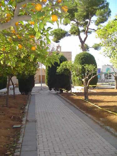 naranjos frente a la capilla de San Telmo