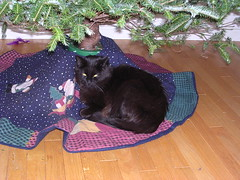 Ares settled under the tree