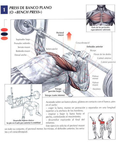 Ejercicios para pectorales taringa for Gimnasio musculacion