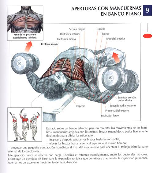 Ejercicios Pectoral