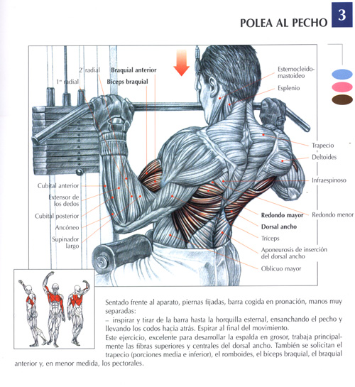 ejercicios para distintos musculos: