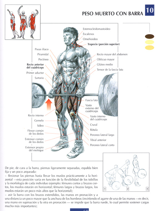 musculacion