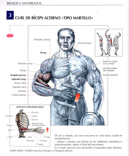 consejos y rutinas para levantar pesas
