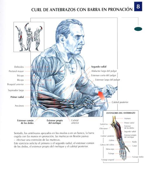 biceps8.jpg (109589 bytes)