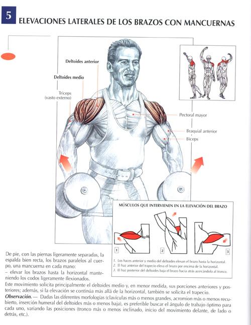 Ejercicios Hombros : Fotos. Musculación y pesas.