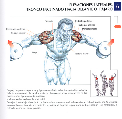triceps16.jpg (88040 bytes)