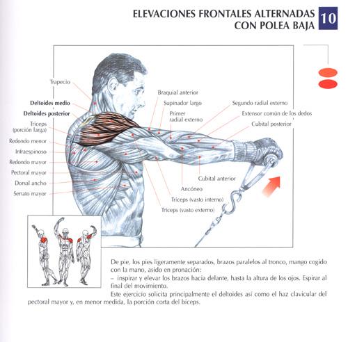 triceps20.jpg (81601 bytes)