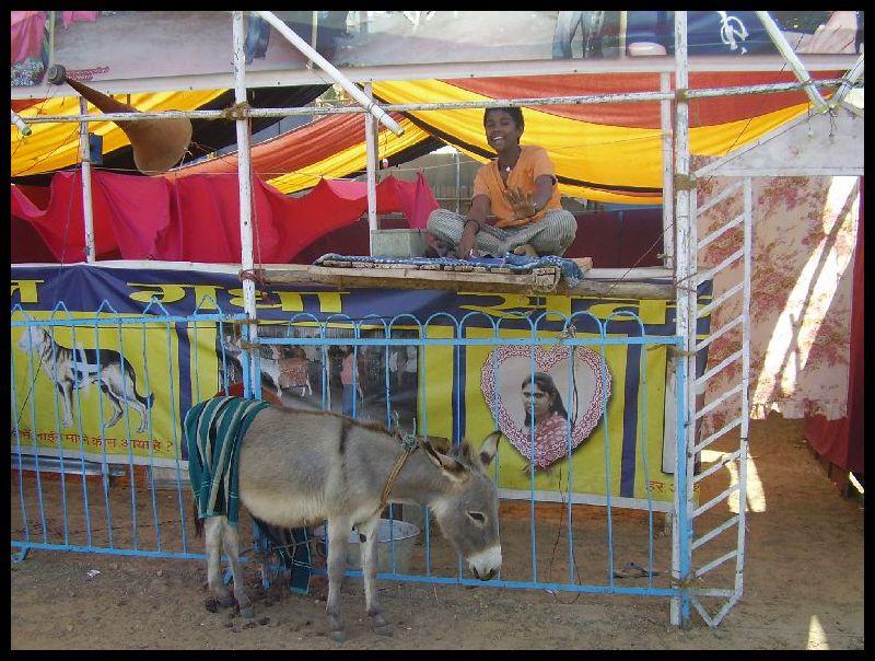 Pannalal the Donkey