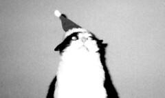 a cat and his eggnog