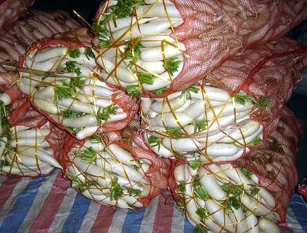 daikon bagged up