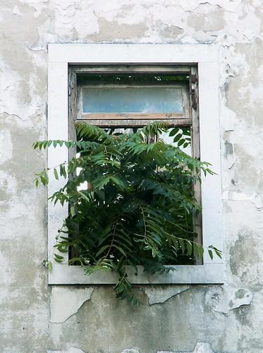 Lisboa - window with tree
