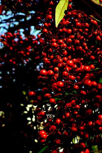 Berries Outside - Redux