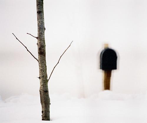 tree and mailbox