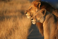 King and Queen photo by chris.merwe