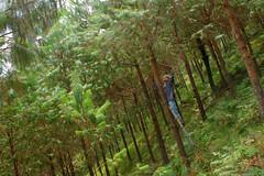 reforestacion_04