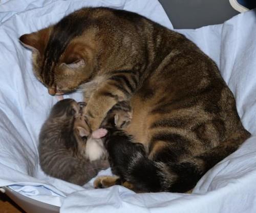 Les-chatons et leur maman