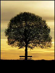 Sunset behind the tree photo by skubmic