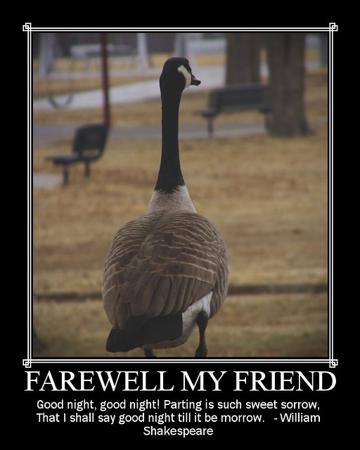 Farewell Funny Quotes: Juliayunwonder: Funny Goodbye Quotes